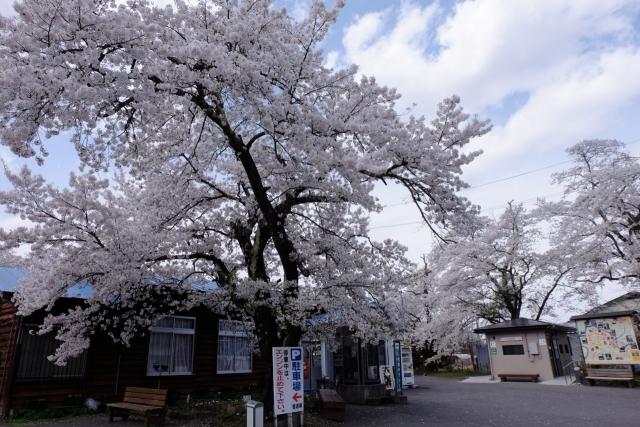 fukushima - 1