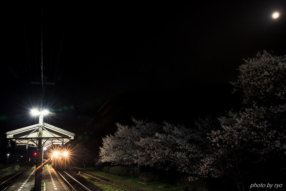 志和地駅の桜_2