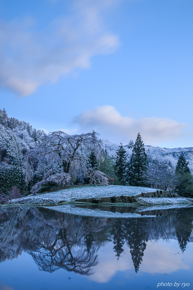 雪と与一野のしだれ桜_1