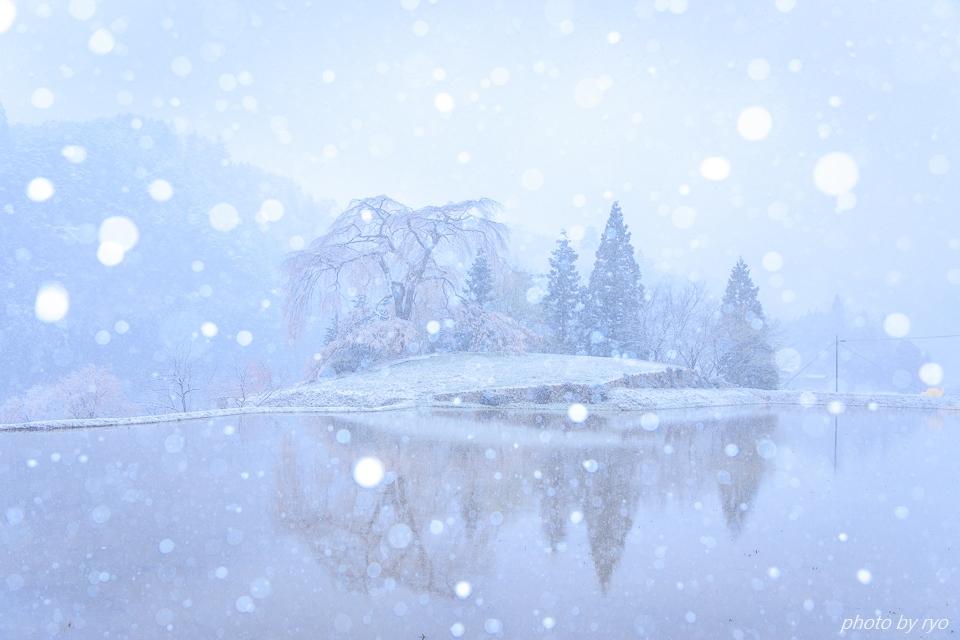 雪と与一野のしだれ桜_7