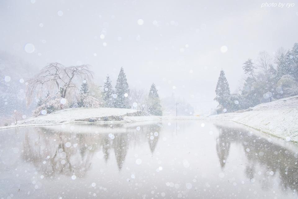 雪と与一野のしだれ桜_8