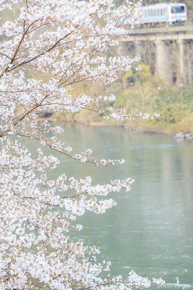 三江線 ~ラストランを桜と共に~_2