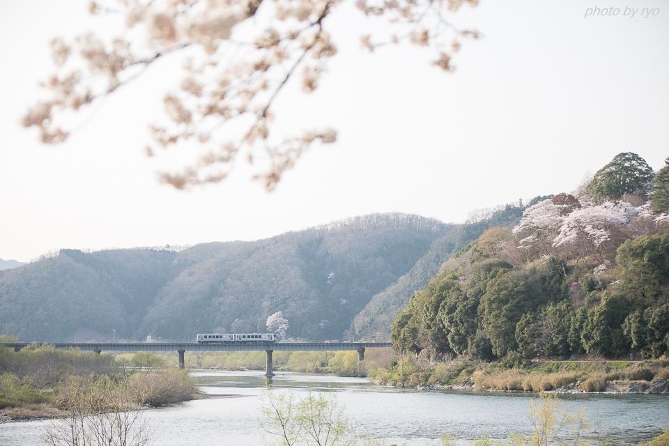 三江線 ~ラストランを桜と共に~_3