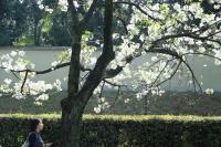 09_佐藤寛子千鳥ヶ淵3013