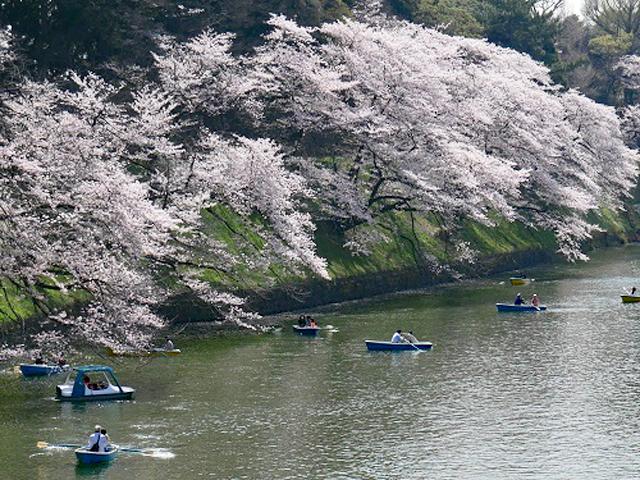 04_藤井卓01-ボートで花見