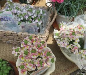 売店の花2