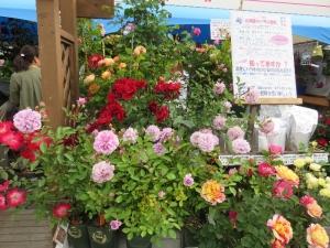 花フェス1