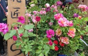 花フェス2