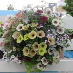 花フェス7