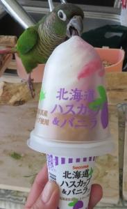 ハスカップアイス