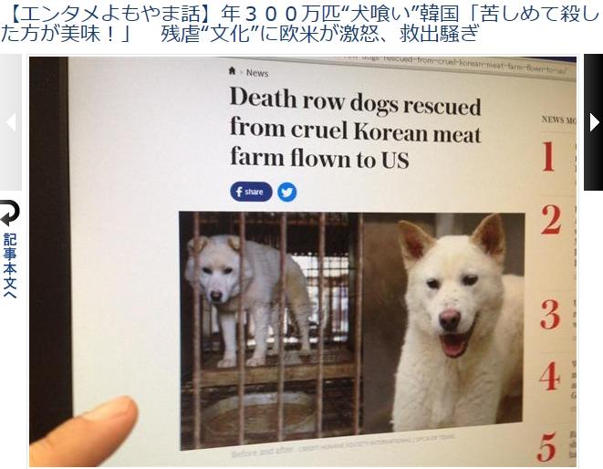 ①【残虐民族】韓国朝鮮人国は毎年300万匹の犬を惨殺している!