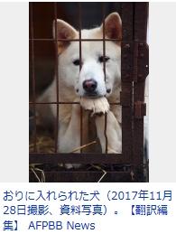 ④【残虐民族】韓国朝鮮人国は毎年300万匹の犬を惨殺している!