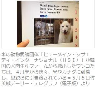 ②【残虐民族】韓国朝鮮人国は毎年300万匹の犬を惨殺している!