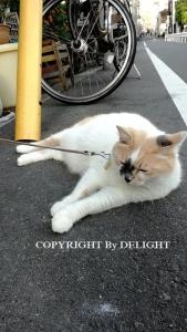 スナックの猫