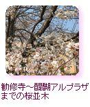 勧修寺~醍醐アルプラザまでの桜並木