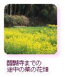 醍醐寺までの途中の菜の花畑