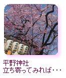 平野神社 立寄ってみれば・・・