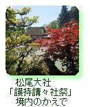 松尾大社「護持講々社祭」境内のかえで