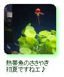熱帯魚のささやき 初夏ですねエ♪