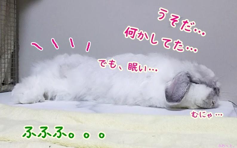s-DSC_9934.jpg