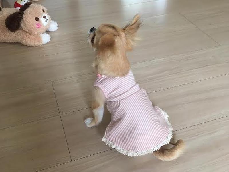 pinkstripedress back