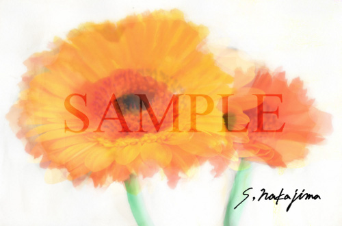 flower011db.jpg