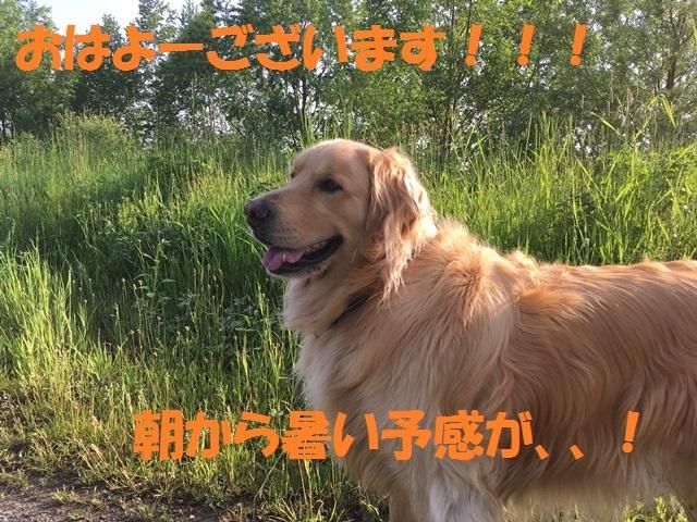 IMG_0584_PP.jpg