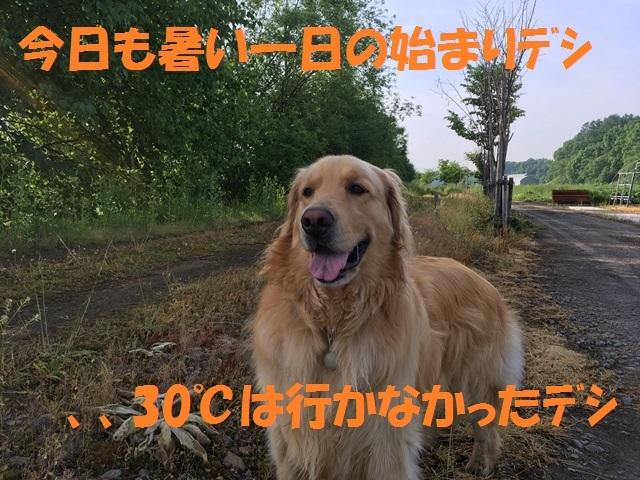 IMG_0594_PP.jpg