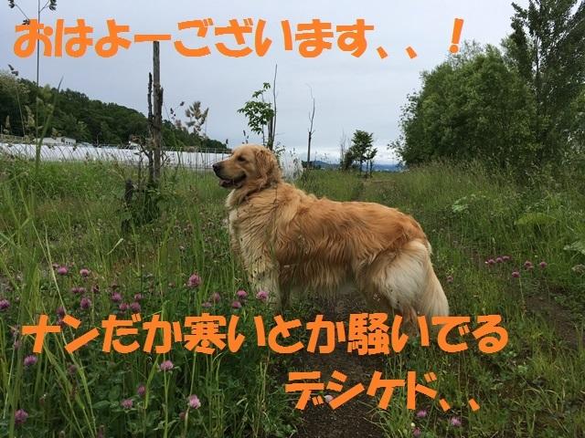 IMG_0898_PP.jpg