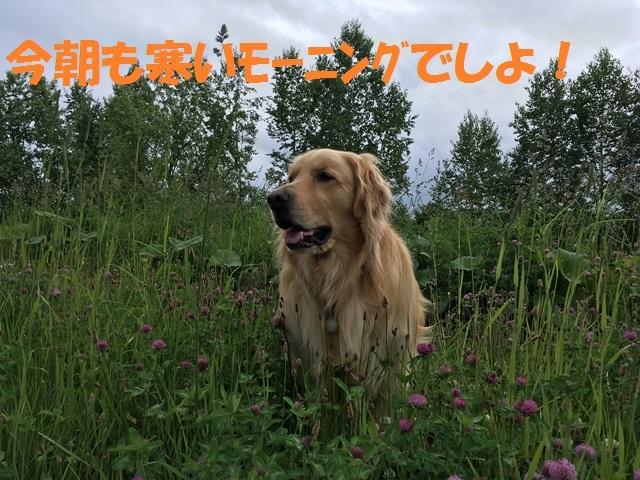 IMG_0921_PP.jpg