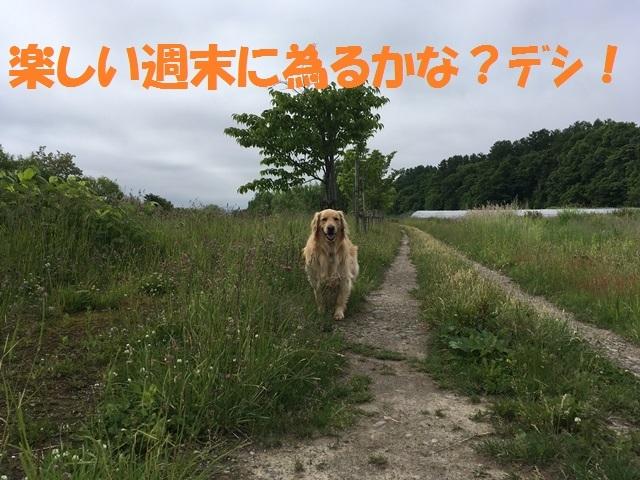 IMG_0969_PP.jpg