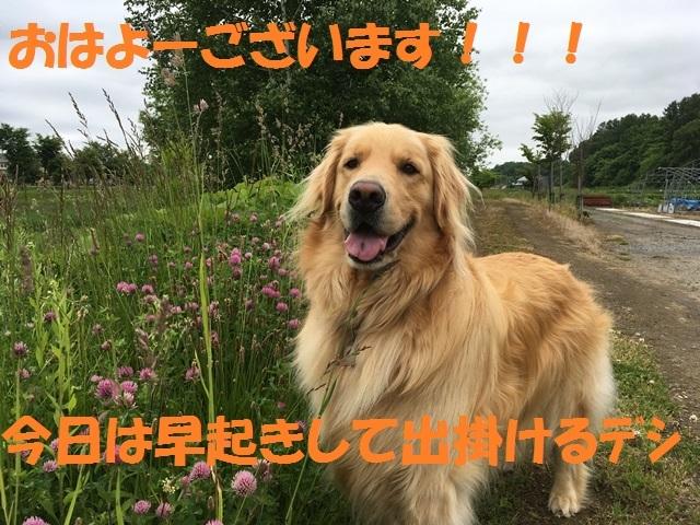 IMG_1012_PP.jpg