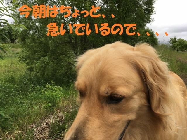 IMG_1310_PP.jpg