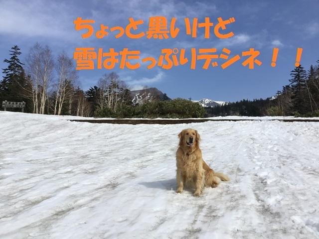 IMG_1353_PP.jpg