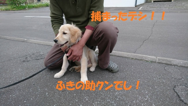 IMG_18061292.jpg