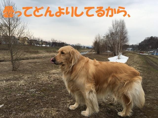 IMG_9135_PP.jpg