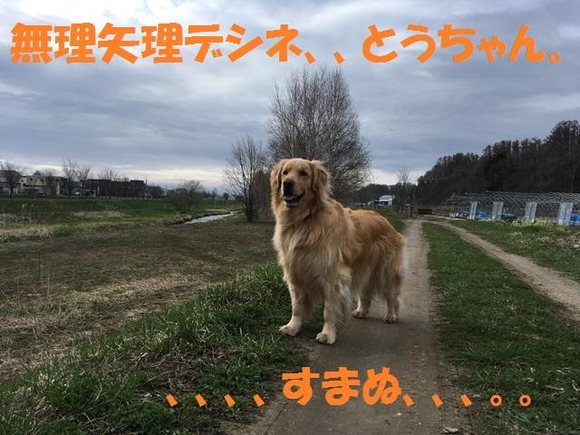 IMG_9478_PP.jpg
