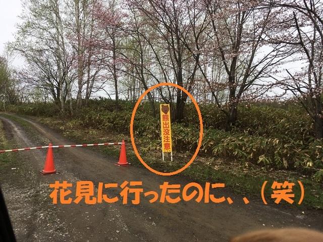IMG_9784_PP.jpg