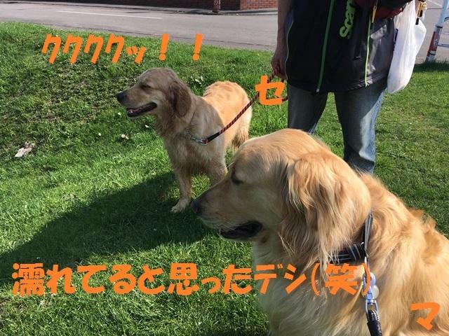 IMG_9894_PP.jpg