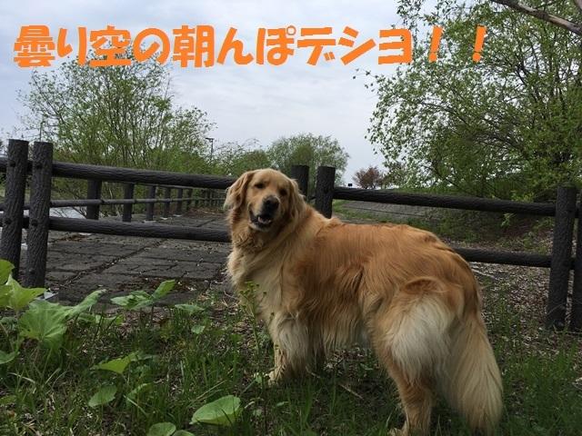 IMG_9900_PP.jpg