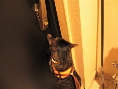 外へ出たくてドアを押す