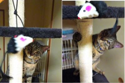 一本足タワーで遊ぶレム