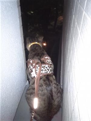 夜の道を眺めるレム