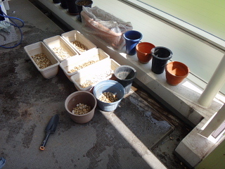プランターと鉢の準備
