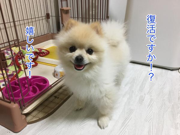 IMG_8299blog.jpg