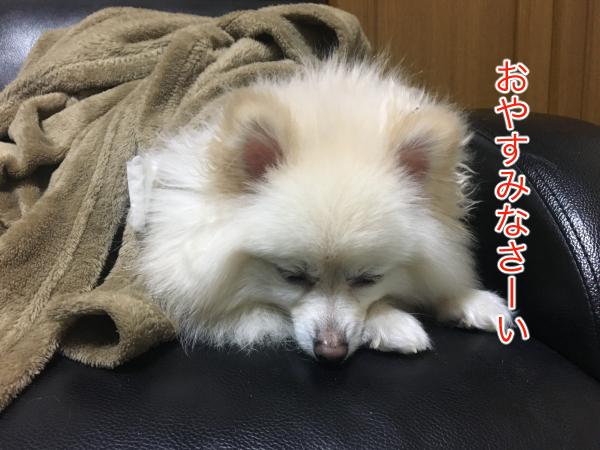 IMG_8306blog.jpg