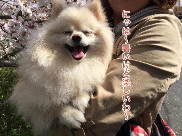 IMG_8387blog.jpg