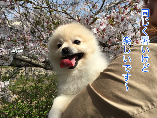 IMG_8388blog.jpg