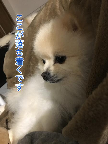 IMG_8429blog.jpg