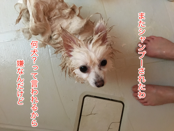 IMG_8543blog.jpg